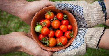 20 Reasons Why You Should Grow Your Own Food